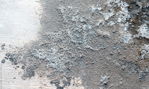Плесень на бетоне